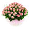 핑크빛 참사랑 (장미50~100송이)