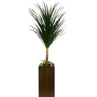드라세나 드라코(공기정화식물)